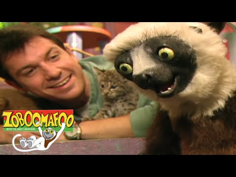 Repeat Zoboomafoo 118 - Feeling Good | HD | Full Episode by