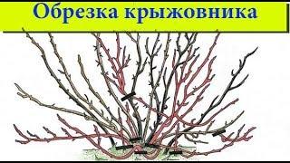 видео Обрезка крыжовника