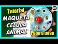 CÓMO HACER UNA CÉLULA ANIMAL Y SUS PARTES | Partes de la célula | Cómo reciclar CDs