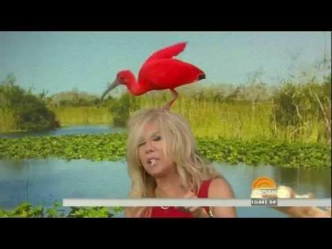 EXOTIC BIRD LANDS ON HEAD OF KATHIE LEE - 60 --- 8-1-14