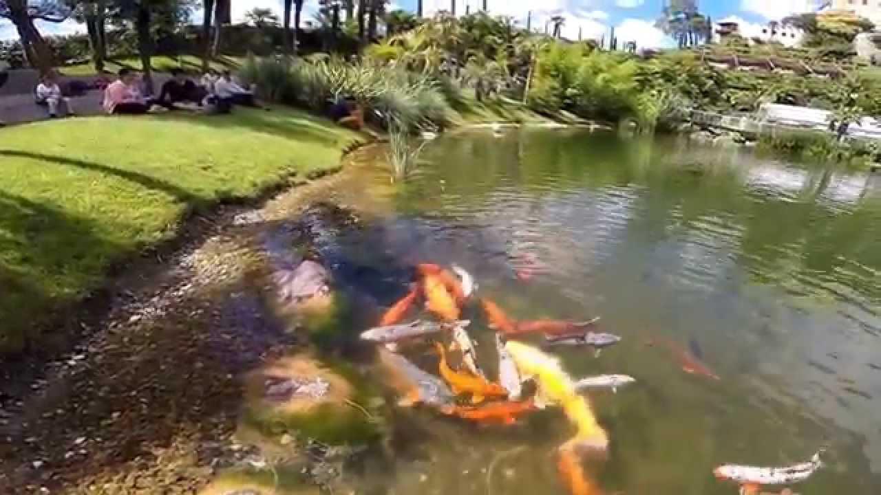 Koi karper vijver botanische tuinen kasteel for Vijverpomp voor grote vijver