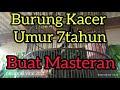Full Masteran Burung Kacer Koci Di Jamin Burung Lain Langsung Nyaut  Mp3 - Mp4 Download