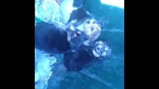 Найдены щенки В Выксе