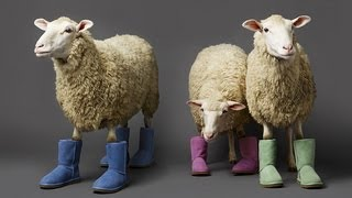 The Truth about UGGS.