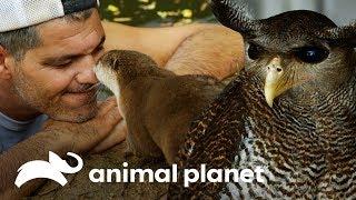 animales-que-viven-en-la-fundacin-de-frank-wild-frank-al-rescate-animal-planet