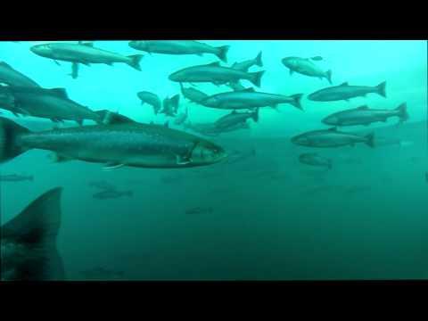 Arctic Aquarium