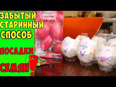 семена помидор видео