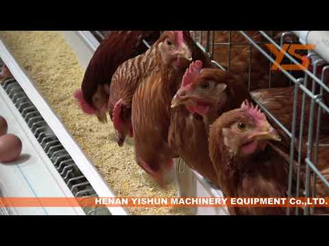 a-type-layer-chicken-cage-farm-battery-cages-equipment-for-egg-farm-business