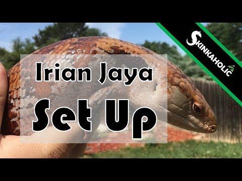 Ep. 5 - Irian Jaya Blue Tongue Skink Set Up
