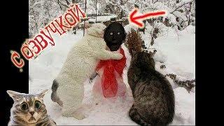 Приколы с котами с ОЗВУЧКОЙ – ГРЕННИ ПРИШЛА, а кот МУРЗИК зажигает – Попробуй не засмеяться
