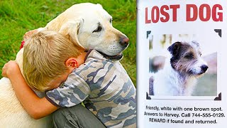 Top 10 LOST DOGS FOUND & Reunited With Owners!