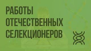 Работы отечественных селекционеров. Видеоурок по биологии 9 класс