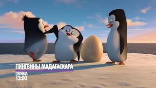 """Пингвины Мадагаскара"" сегодня на НТК!"