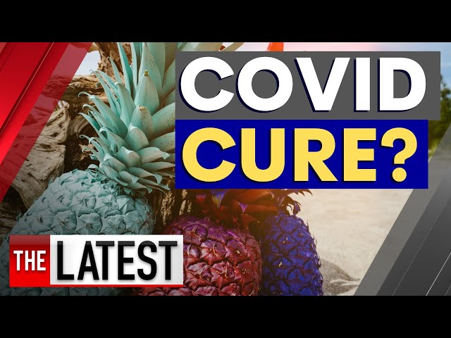 Breakthrough treatment: Could pineapples be the key to a COVID-19 cure? | 7NEWS