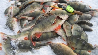 Зимняя рыбалка на реке!!!(Рано утром мы приехали на реку Десна и нас застал шикарный рассвет,смотрите до конца!!! ..., 2017-01-03T15:06:01.000Z)