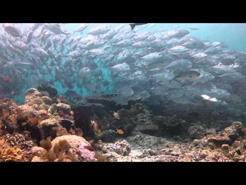 Diving at Sipadan, Kapalai, Mabul and Siamil (16-19 May 2013)