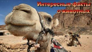 Интересные факты о животных/Interesting facts about animals