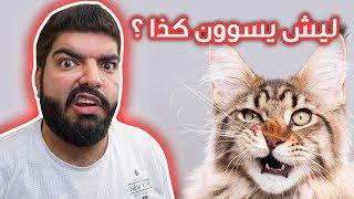 لماذا القطط ترمي وتكسر اغراضنا ؟؟