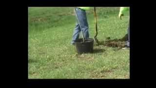 City Of Kirksville Plants Trees For Arbor Day