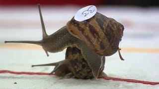 World Snail Racing Championships 2017
