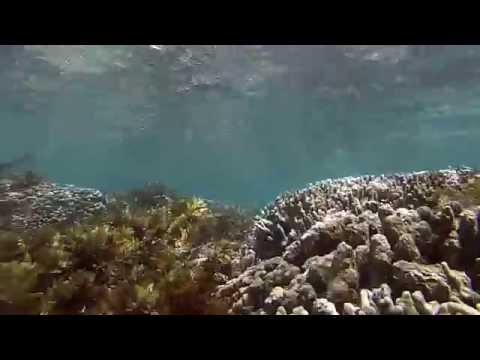 Samoa Marine Life