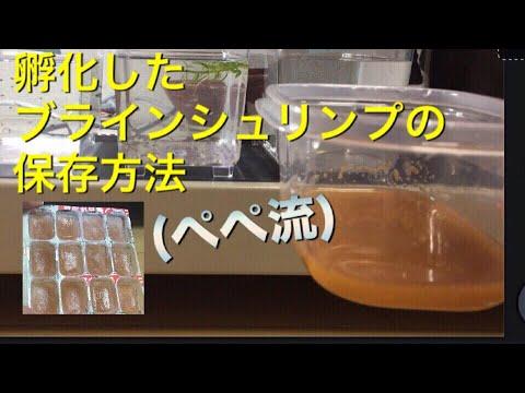 ブラインシュリンプの保存【アクアリウム 熱帯魚 グッピー水槽】