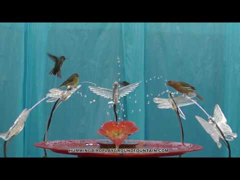 Hummingbirds Bathing 10min Community Bath with Goldfinches & Housefinches 6/25/16