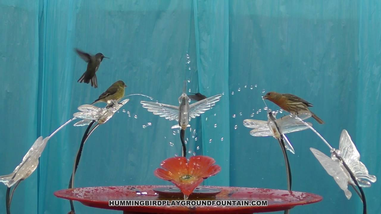 Hummingbirds Bathing 10min Community Bath With Goldfinches
