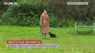 Петербургские коты участвуют в конкурсе на лучшего двойника известного литературного персонажа