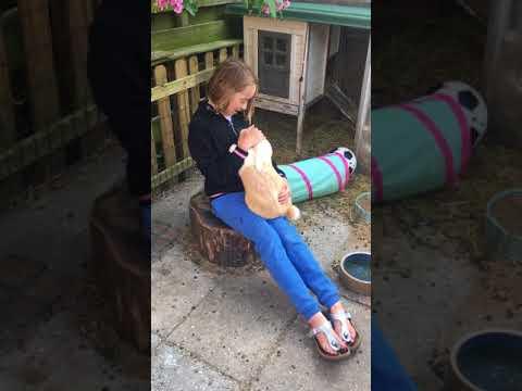Spelen met konijnen