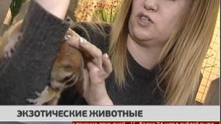 Экзотические животные. Новости 12/01/2017. GuberniaTV