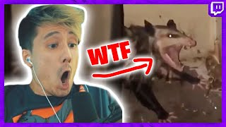REACTION auf UNUSUAL MEMES / DEUTSCHE MEMES Was ist das für ein Tier?😨 I Julien Bam Twitch Highlight