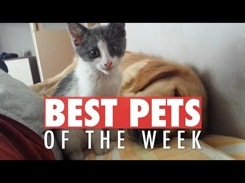 Best Pets of the Week Video Compilation| April 2018 Week 2