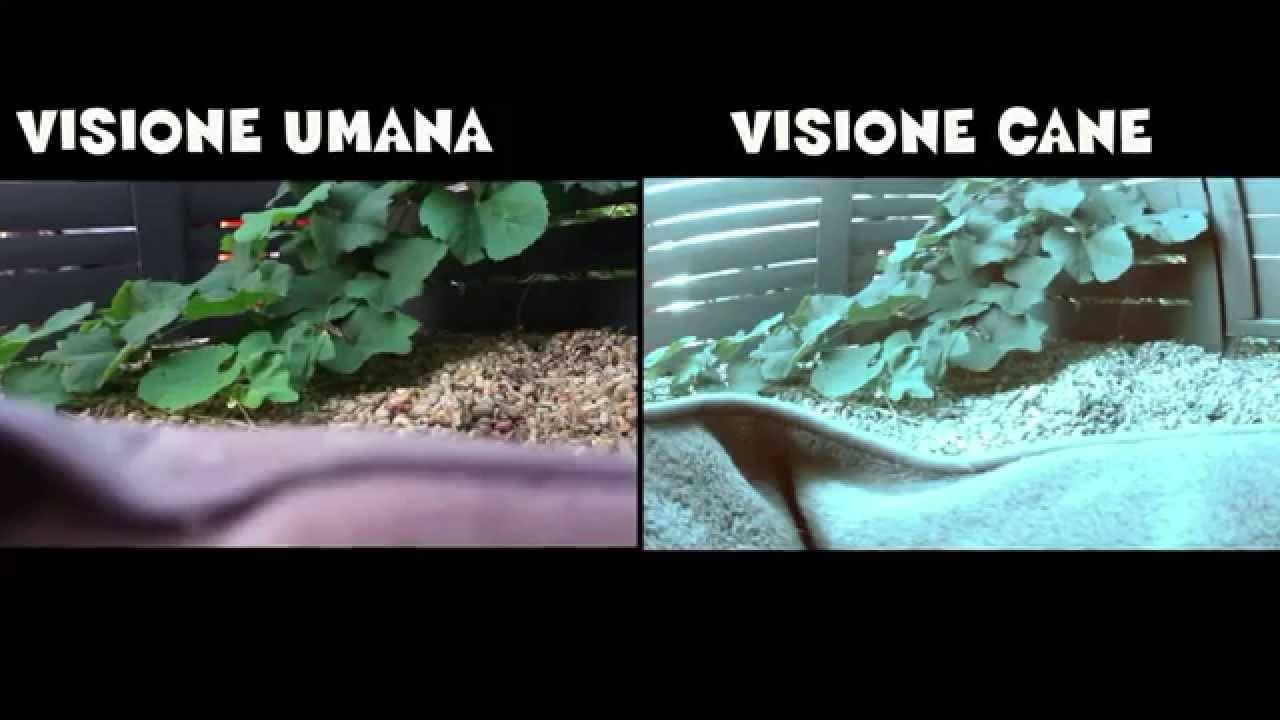 Il mondo visto con gli occhi degli animali  YouTube