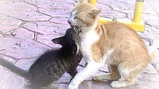 前回の動画 https://youtu.be/2V9LWg7hChA まるで順番に子猫と遊んであ...