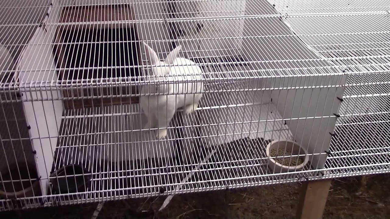 Installing the Wire Shelf Rabbit Cage - YouTube
