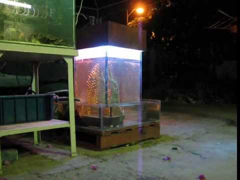 Vac pumpless inverted aquarium doovi for Inverted fish tank