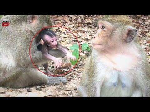 Wow Kidnapper Angry Baby she fight baby/ Mum saw that she cries Youlike Monkey 1306