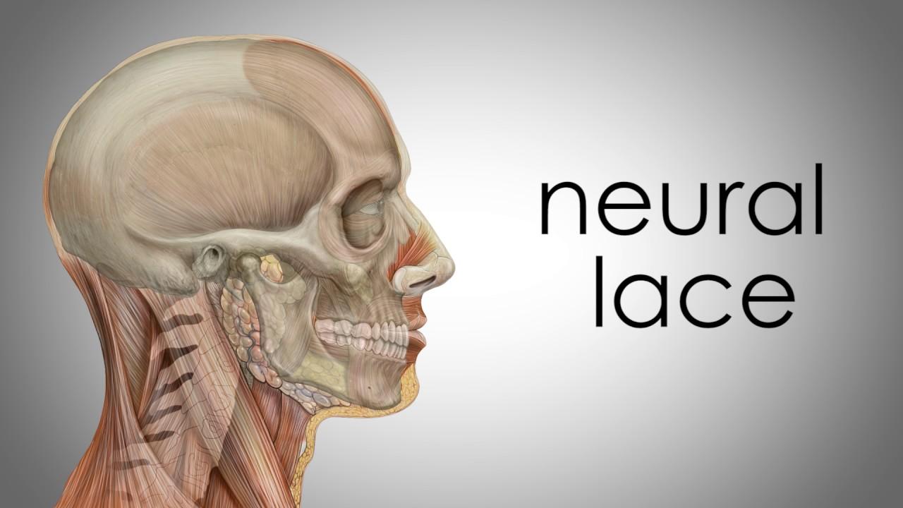 Elon Musk-backed Neuralink unveils brain-implant technology