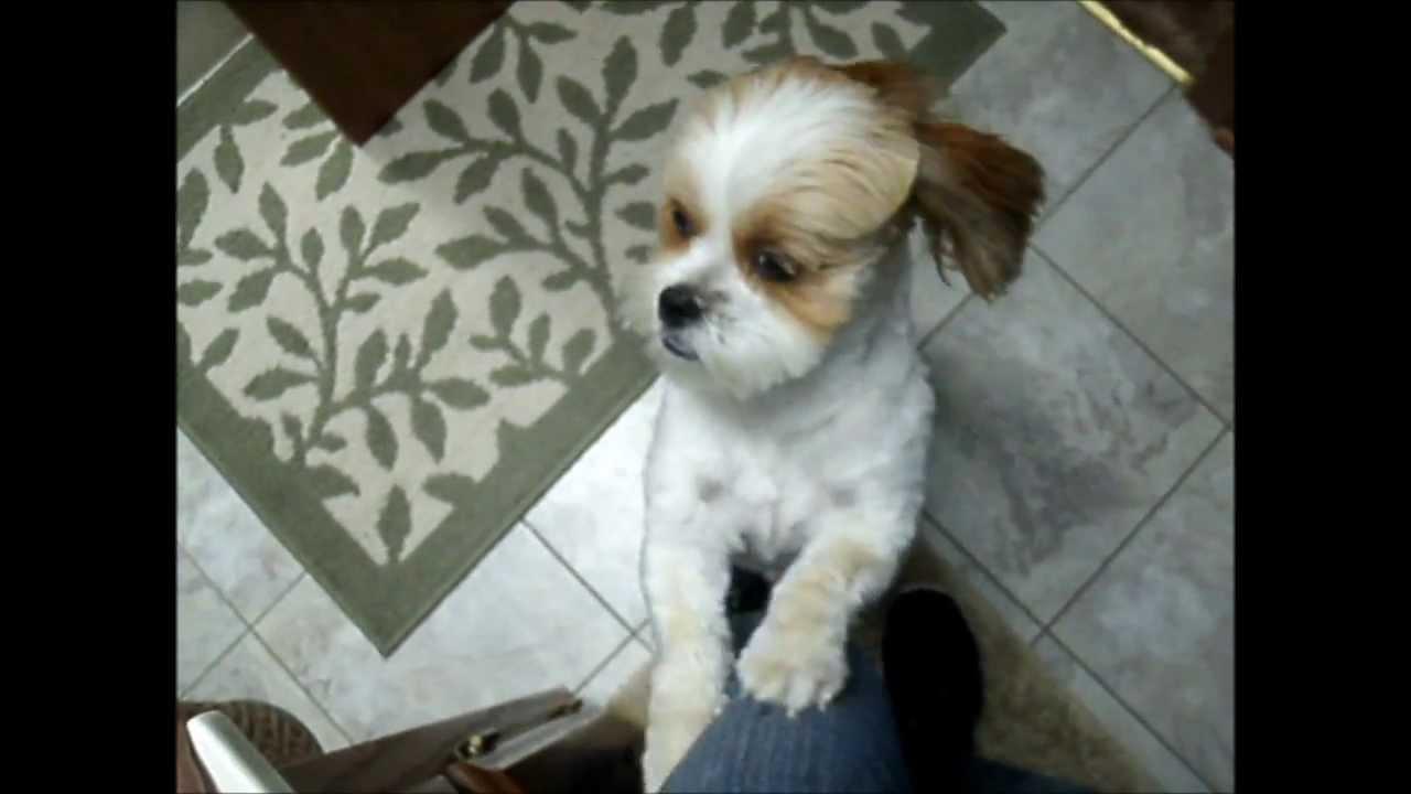 Crazy Dog Keeps Scratching Bathroom Door
