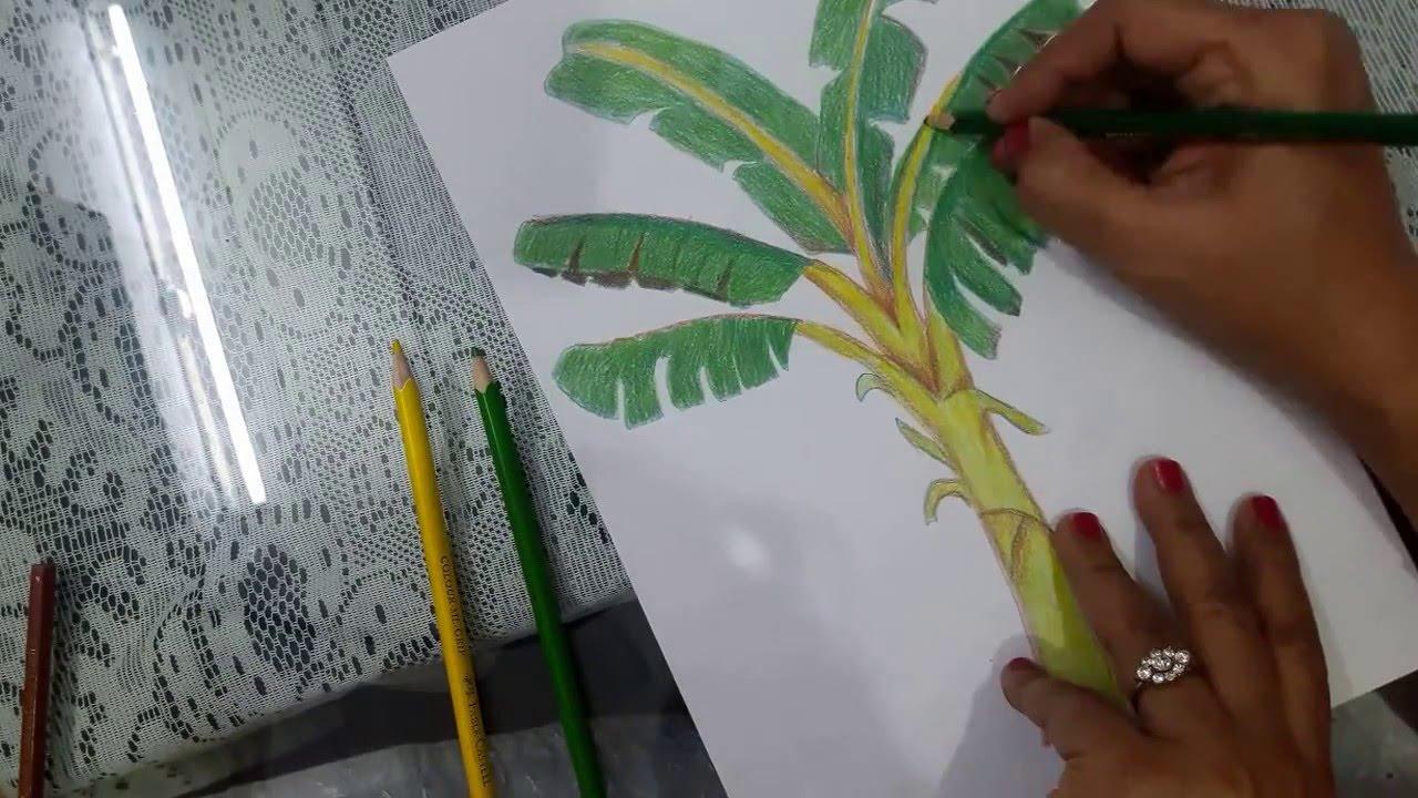 Uncategorized How To Draw A Banana Tree how to draw a banana tree youtube