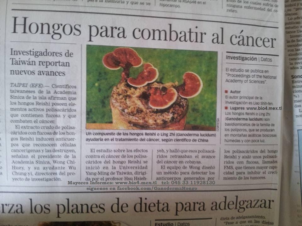 Resultado de imagen para ganoderma y el cancer