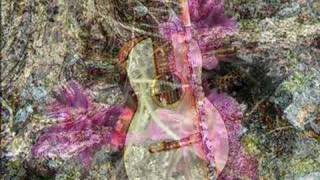 Flute World presents Celtic Music for Flute by Jessica Walsh