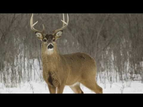 Top 5 Deer Hunting Rounds