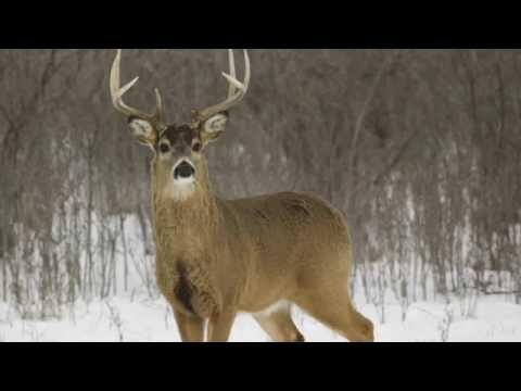 Top 5 Deer Hunting Rounds
