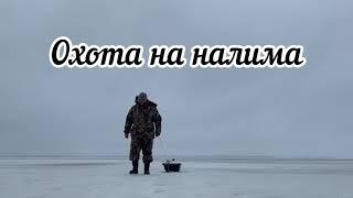Охота на налима, рыбалка, зимняя рыбалка.