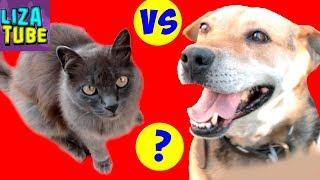 CHALLENGE Моя собака против Котов КТО УМНЕЕ Челлендж Dog vs Cats