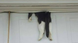 Cop responds to call and finds cat hanging from garage door – owner finally returns during rescue op