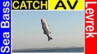 ►Kıyı Yemli Levrek Avı Sülünezle Kıyıdan Levrek Avı Oltayla Balık Avı Surfcasting 7fishing