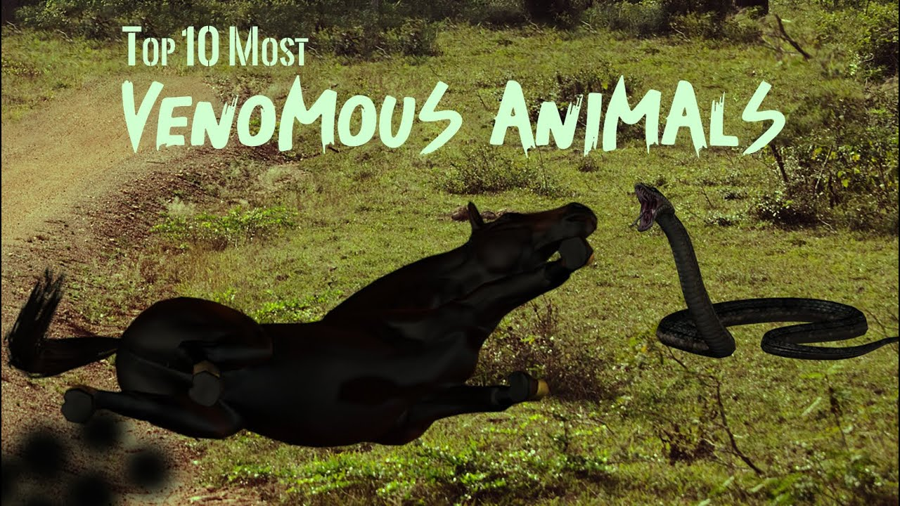 Download The Top 10 Most Venomous Animals On Earth (Gulp)